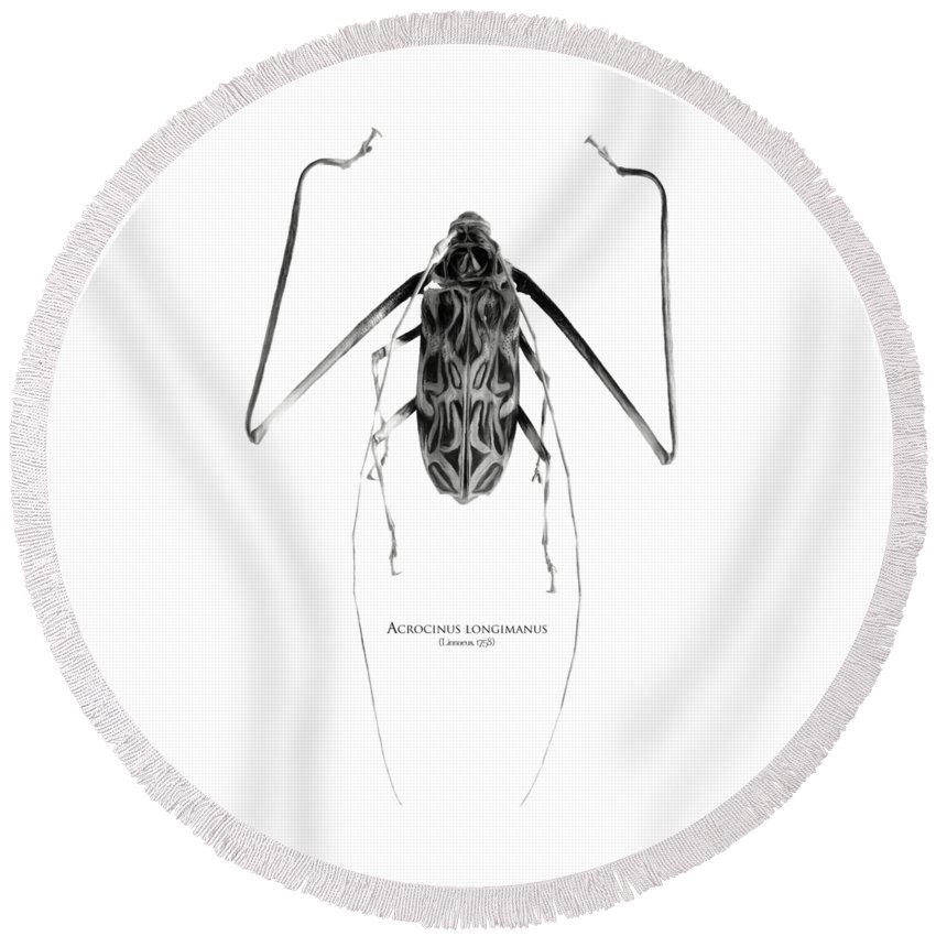 Black-and-white Round Beach Towel featuring the digital art Acrocinus I by Geronimo Martin Alonso