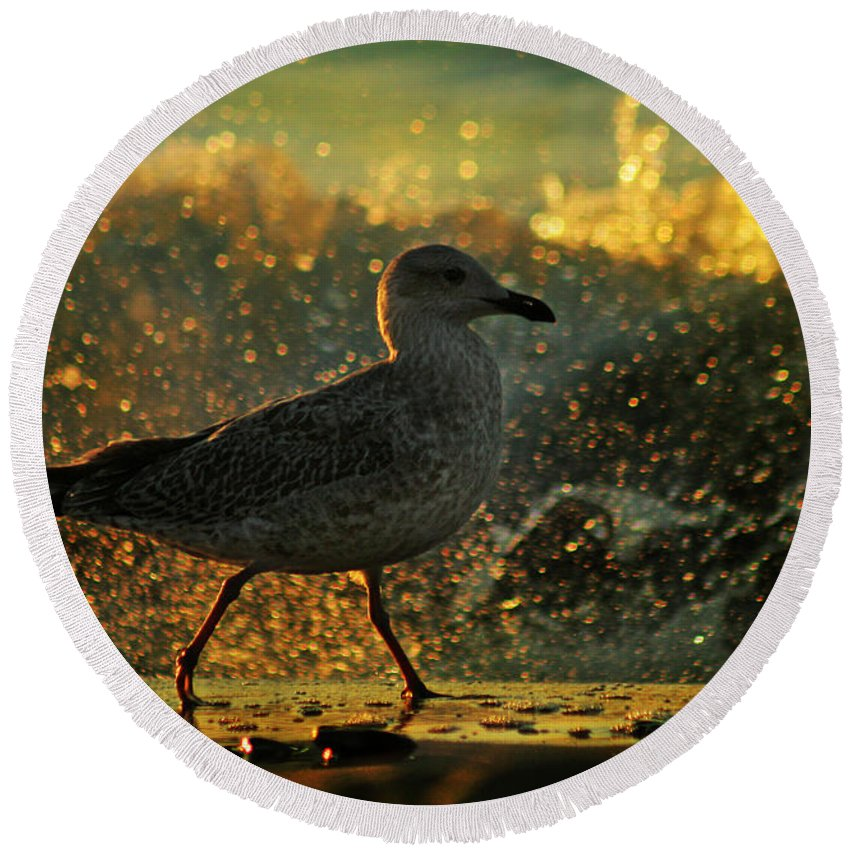 Seagull Round Beach Towel featuring the photograph Have A Walk By Th Sea by Angel Ciesniarska