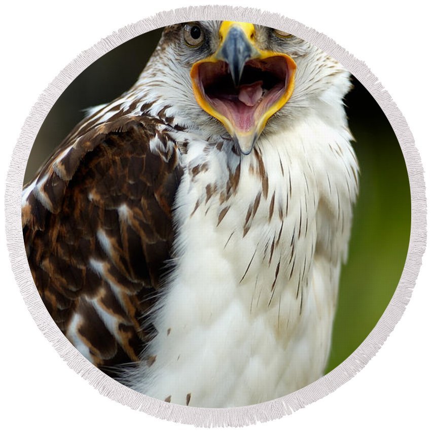 Hawk Round Beach Towel featuring the photograph Hawk by Doug Gibbons