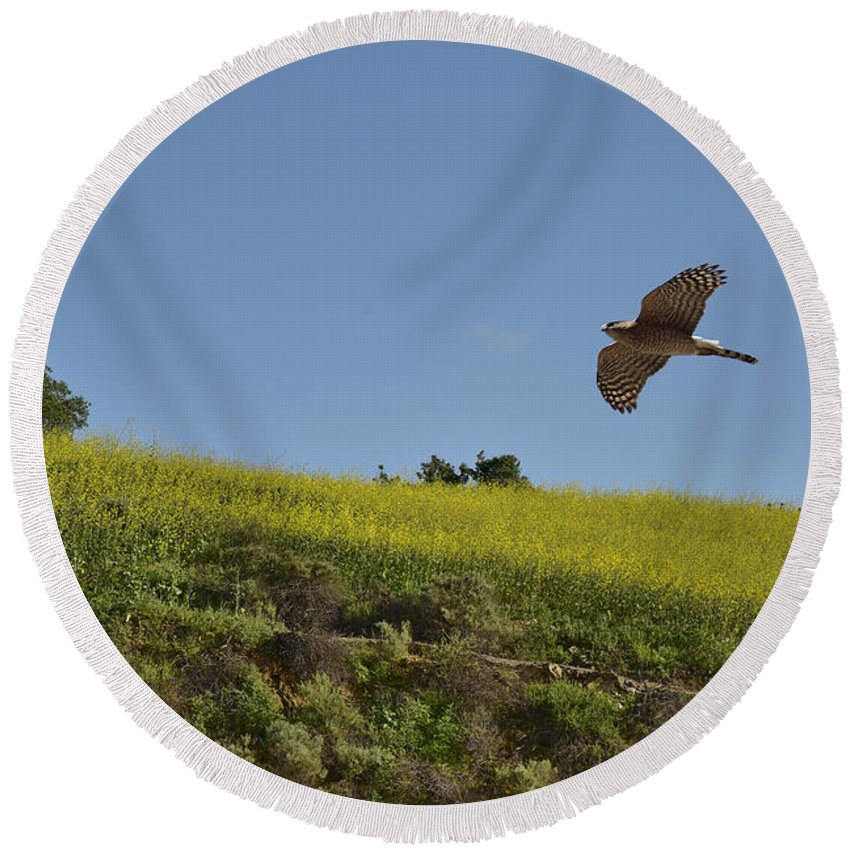 Linda Brody Round Beach Towel featuring the photograph Hawk Flying Over Field Of Yellow Mustard by Linda Brody