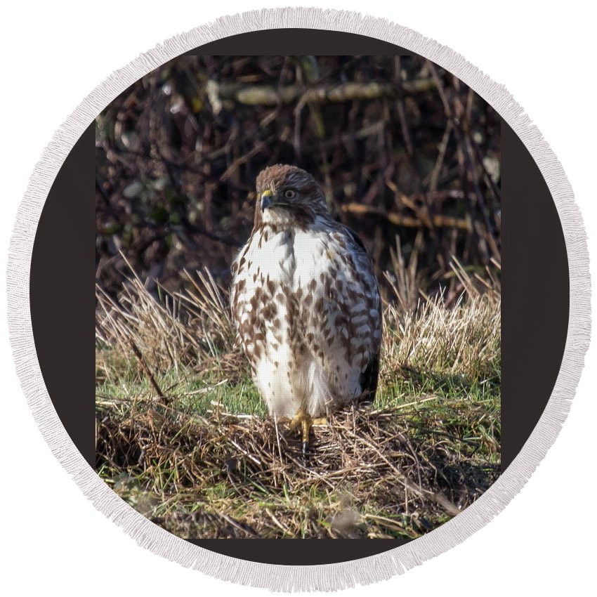 Hawk Round Beach Towel featuring the photograph Hawk by Laura Lien