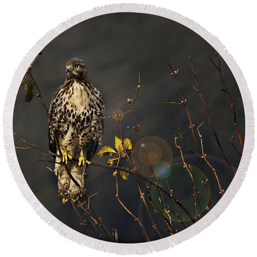 Red-tail Hawk Round Beach Towel featuring the photograph Hawkeye by John Christopher