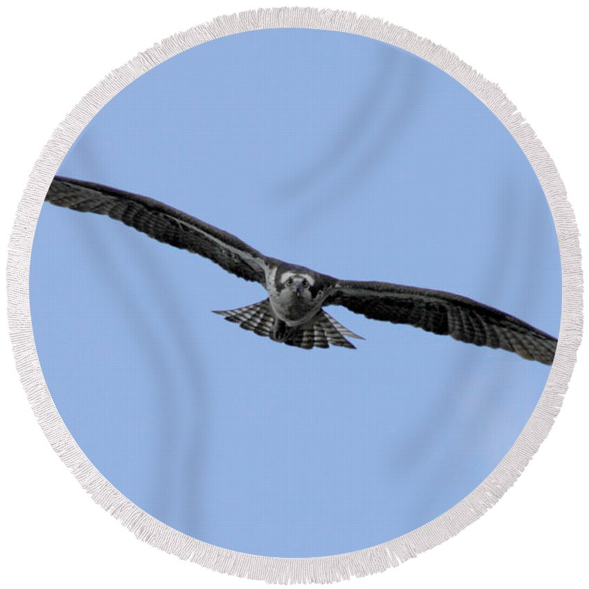 Bird Round Beach Towel featuring the photograph Head On by Donna Blackhall