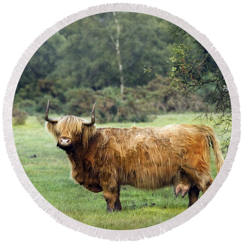 Heilan Coo Round Beach Towel featuring the photograph Heilan Coo by Angel Ciesniarska