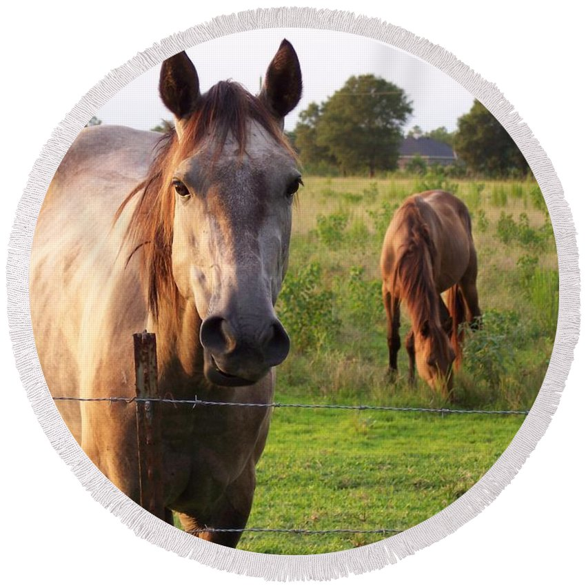 Horse Round Beach Towel featuring the photograph Hello Stranger by Brandy Woods