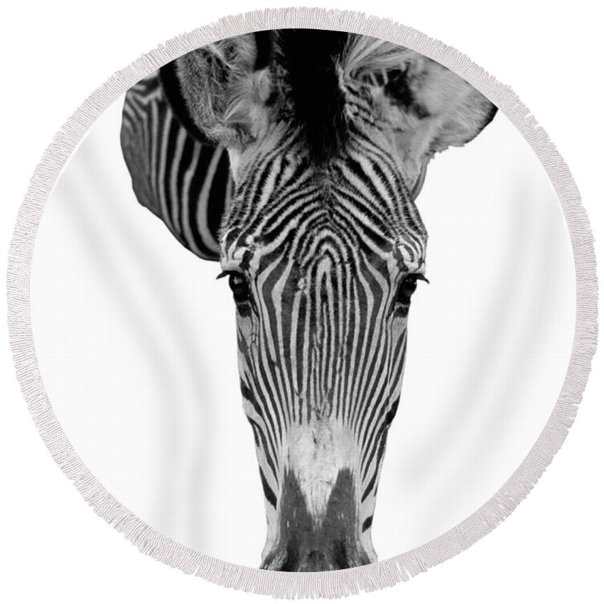 Zebra Round Beach Towel featuring the photograph Here's Looking At You by Jerry McElroy
