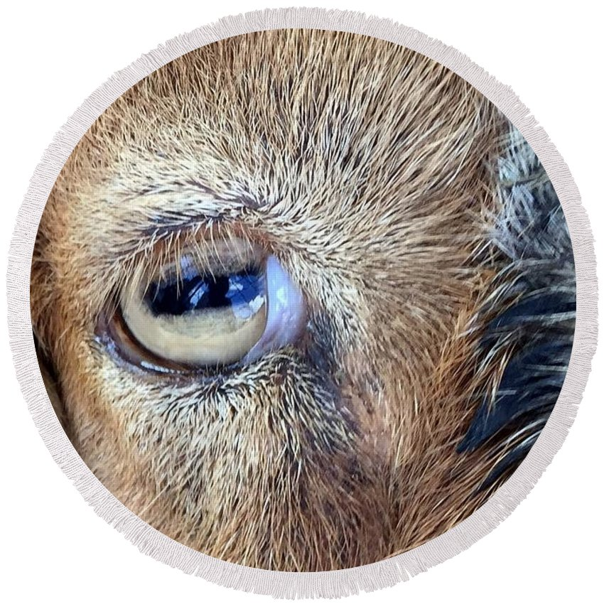 Looking Round Beach Towel featuring the photograph Here's Looking At You Kid - The Truth About Goats' Eyes by Barbie Corbett-Newmin