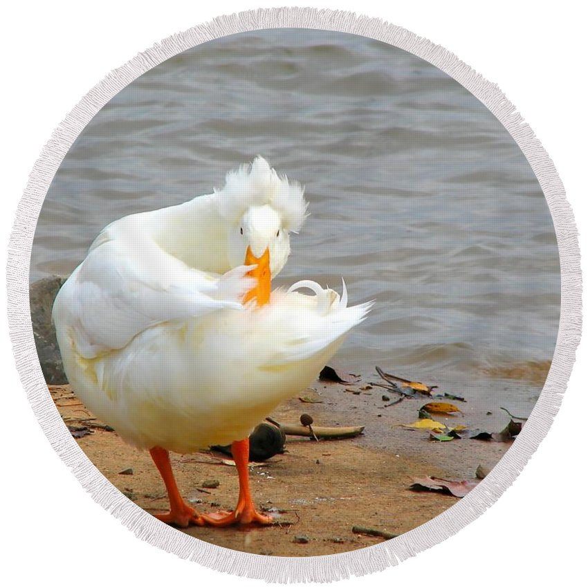 Duck Round Beach Towel featuring the photograph Here's Looking At You by Todd A Blanchard
