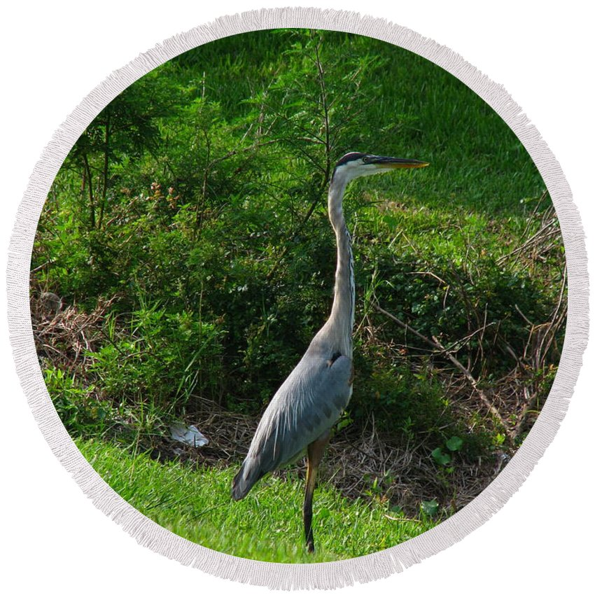 Patzer Round Beach Towel featuring the photograph Heron Blue by Greg Patzer