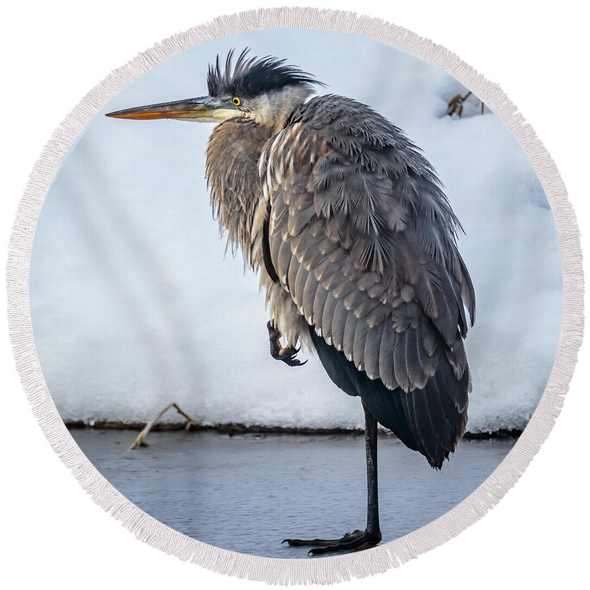 Wildlife Round Beach Towel featuring the photograph Heron On Ice by Albert Seger