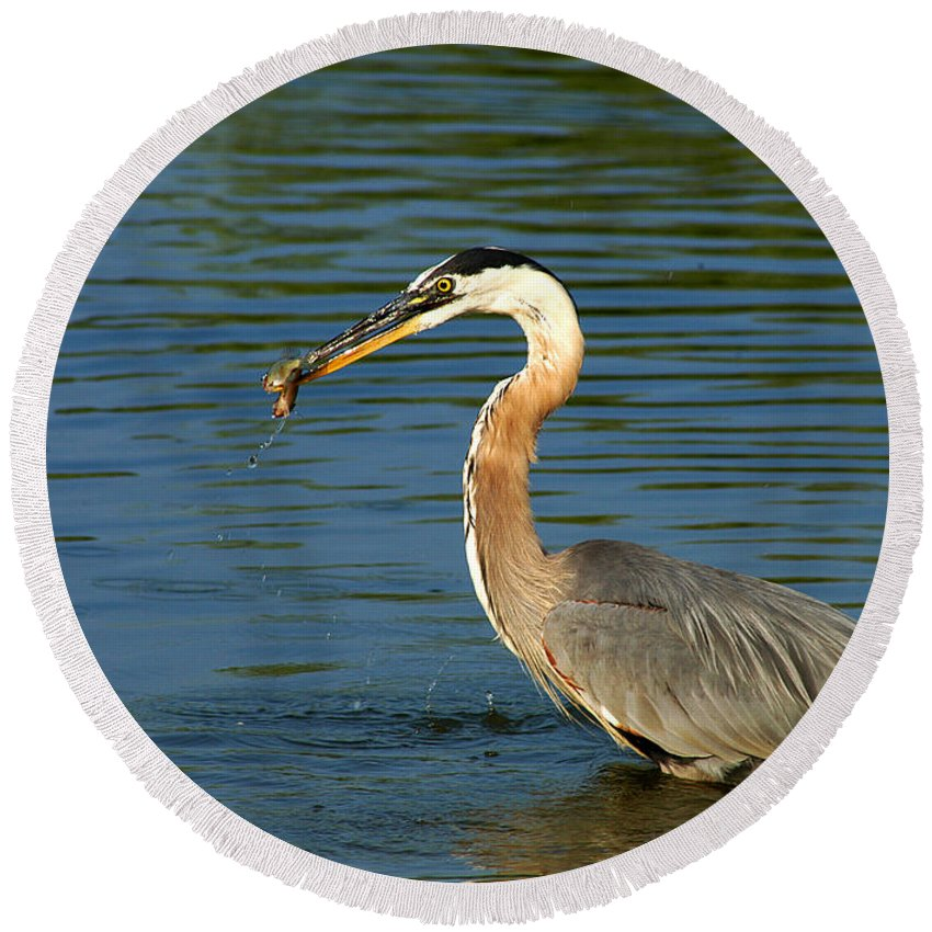 Clay Round Beach Towel featuring the photograph Herons Catch by Clayton Bruster