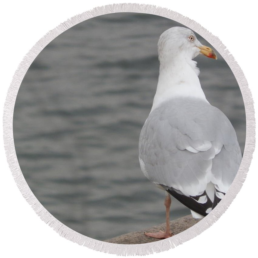 Europe Round Beach Towel featuring the photograph Herring Gull Observing by Margaret Brooks