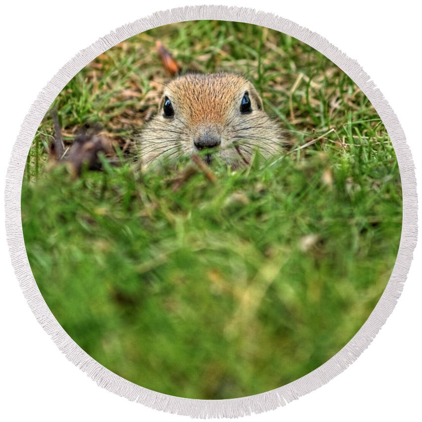 Inglewood Bird Sanctuary Round Beach Towel featuring the photograph Hey...wha S'up by James Anderson