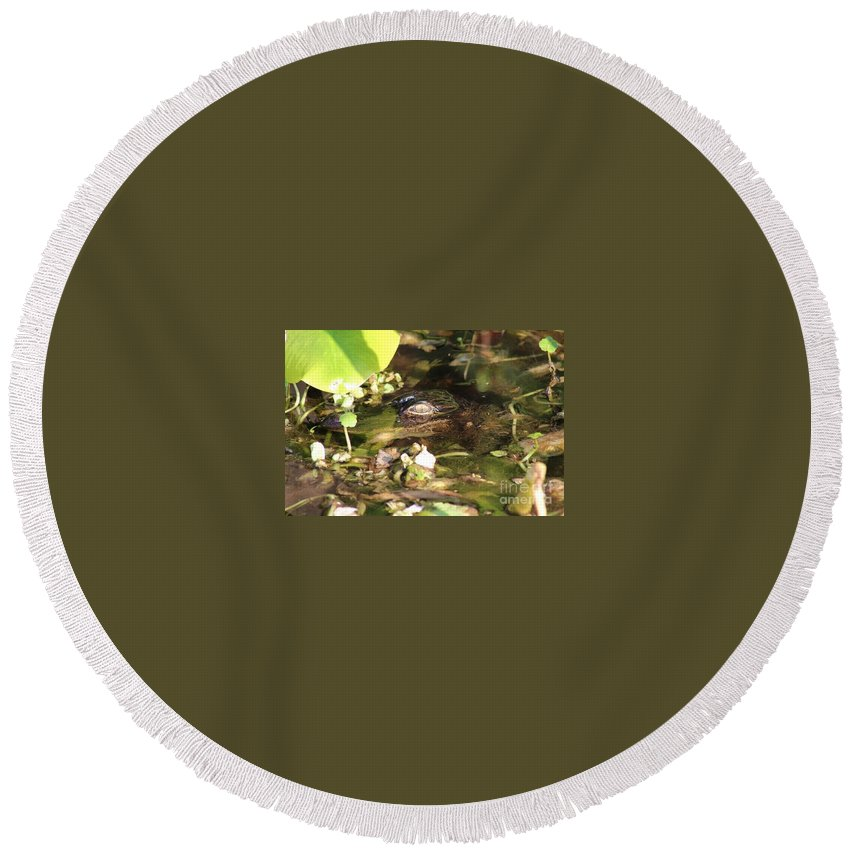 Gator Round Beach Towel featuring the photograph Hidden Gator by Geoffrey Shaffer