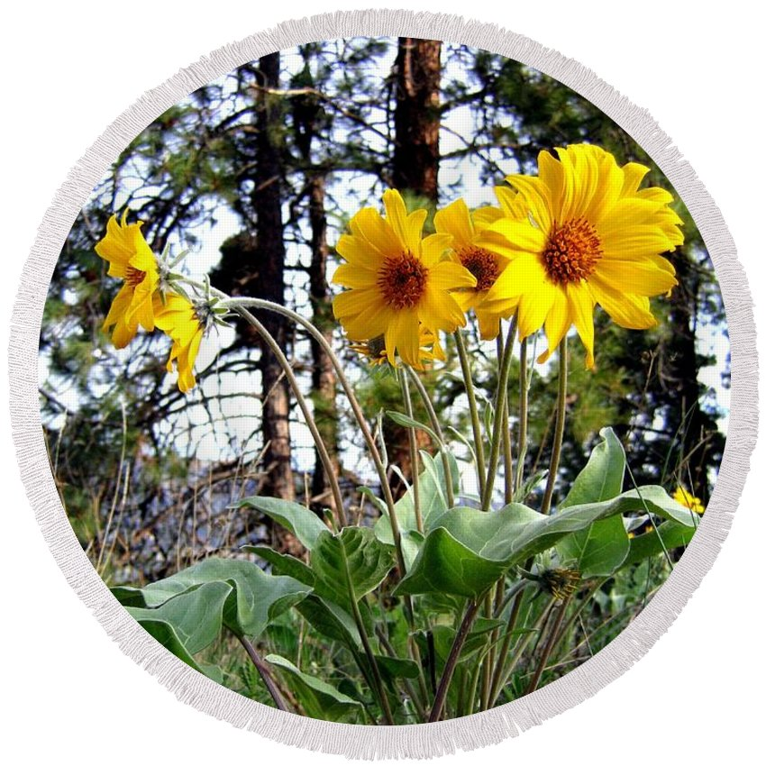 Sunflowers Round Beach Towel featuring the photograph High In The Hills by Will Borden