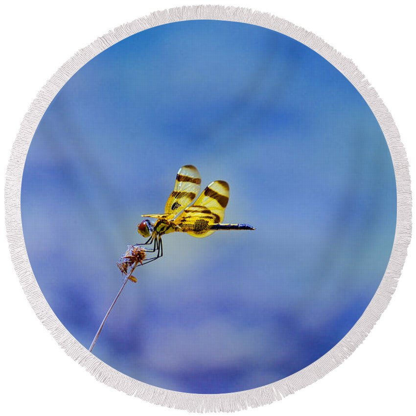 Bugs Round Beach Towel featuring the photograph High In The Sky by Judy Kay