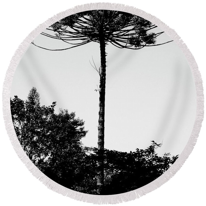 Tree Round Beach Towel featuring the photograph High by Raquel Daniell