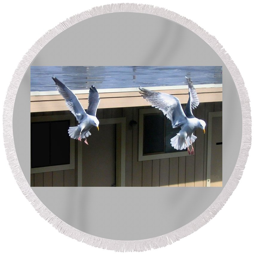 Seagulls Round Beach Towel featuring the photograph High Spirits by Will Borden