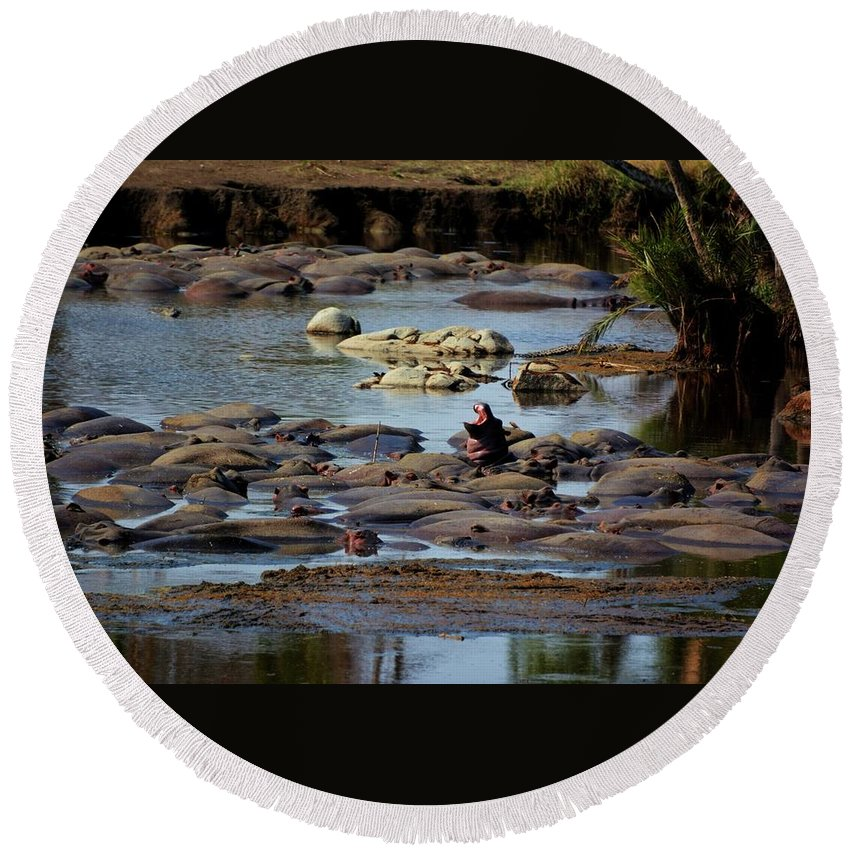 Hippo Round Beach Towel featuring the photograph Hippo Raft by Kenneth Imler