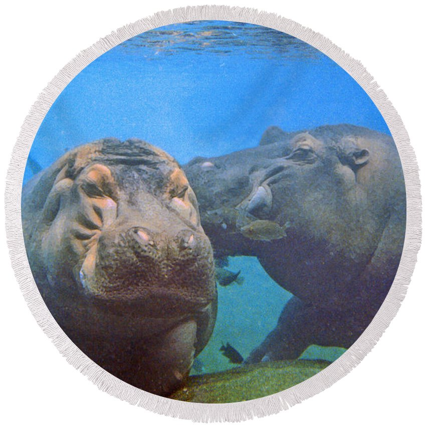 Animals Round Beach Towel featuring the photograph Hippos In Love by Steve Karol