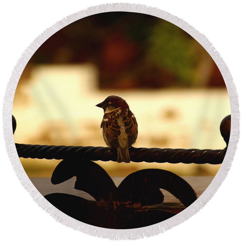 Bird Round Beach Towel featuring the photograph His Eye Is On The Sparrow by Linda Shafer