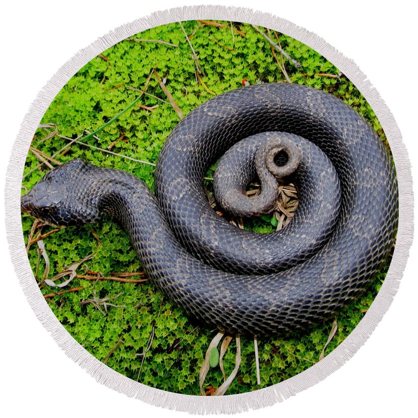 Eastern Hognose Snake Round Beach Towel featuring the photograph Hognose Spiral by Joshua Bales
