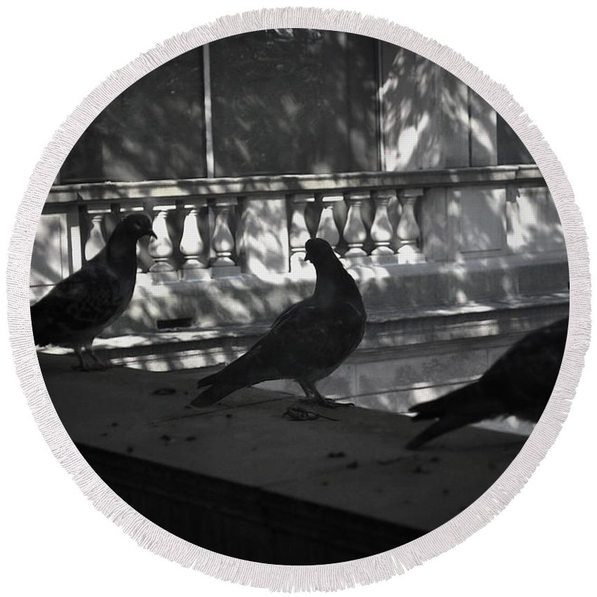 Birds Round Beach Towel featuring the photograph Holding Court by Tim Nyberg