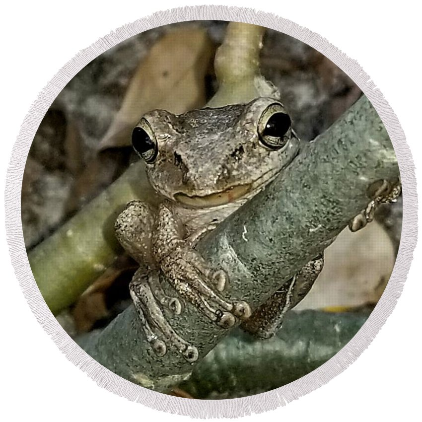 Tree-frog Round Beach Towel featuring the photograph Holding On by Donald Hazlett