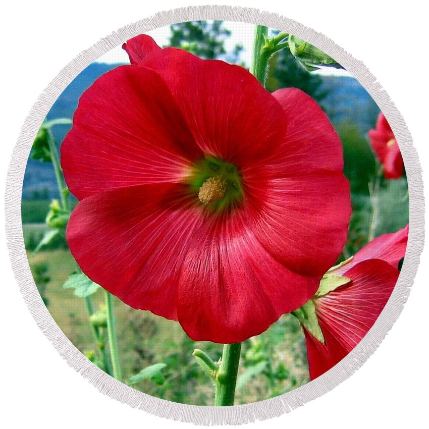 Hollyhocks Round Beach Towel featuring the photograph Hollyhock Hill by Will Borden