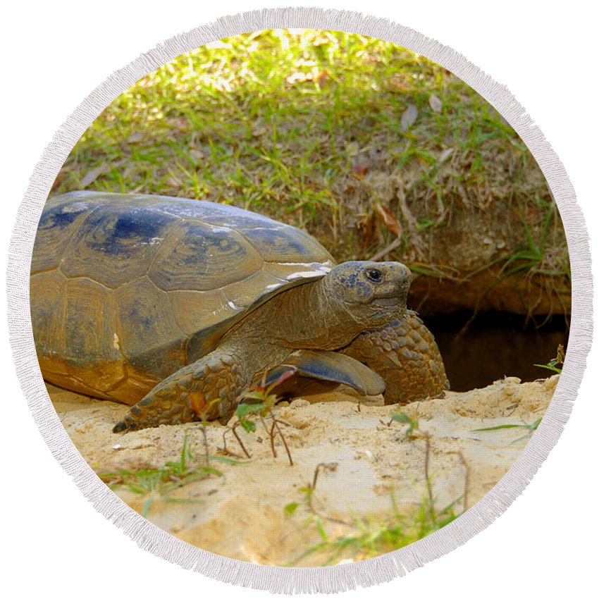 Gopher Tortoise Round Beach Towel featuring the photograph Home Sweet Burrow by David Lee Thompson