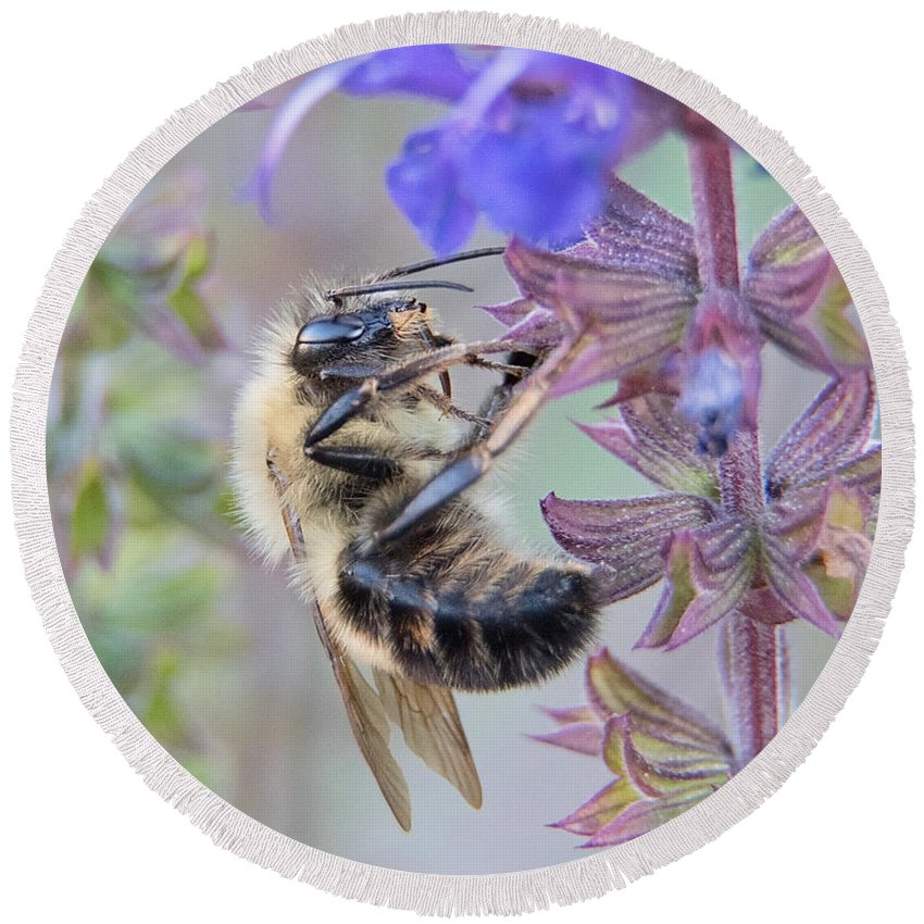 Macro Round Beach Towel featuring the photograph Honey Bee by Dannielle Walter