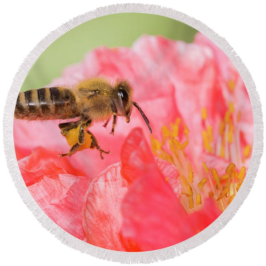 Background Round Beach Towel featuring the photograph Honey Bee In Flight by Mircea Costina Photography