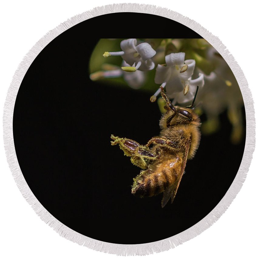 Honey Bee Round Beach Towel featuring the photograph Honey Bee Kick, Apis Mellifera by Christy Cox