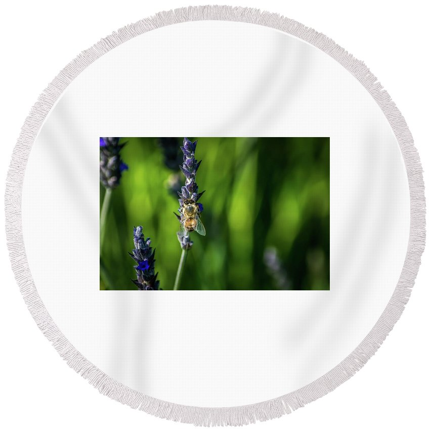 Bee Round Beach Towel featuring the photograph Honey Bee On Flower #5 by Eric Strickland