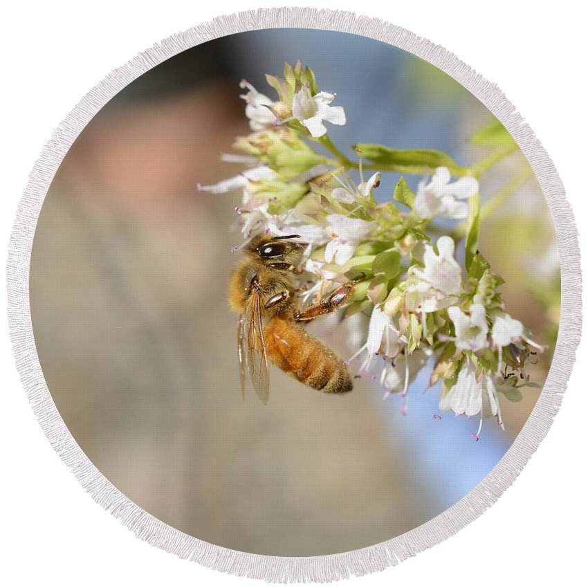 Honey Bee Round Beach Towel featuring the photograph Honey Bee On Herb Flowers by Marv Vandehey