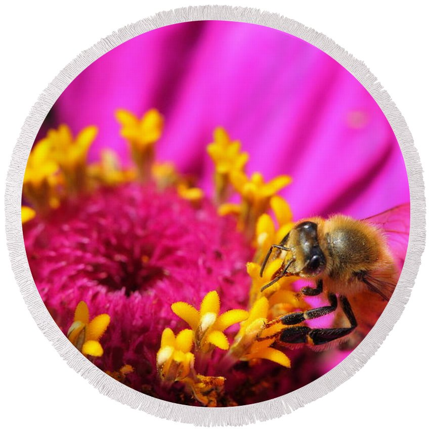 Pink Round Beach Towel featuring the photograph Honey Bee Pollinating Zinnia by Angela Rath