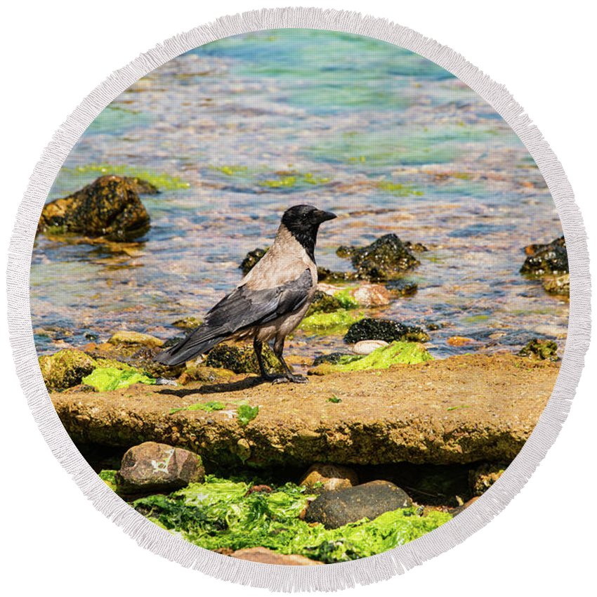 Burgazada Island Round Beach Towel featuring the photograph Hooded Crow by Bob Phillips