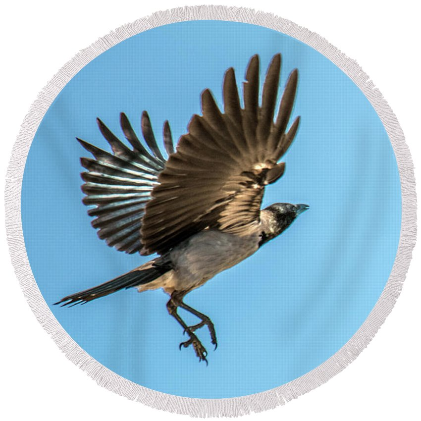 Bird Round Beach Towel featuring the photograph Hooded Crow In Flight by William Bitman