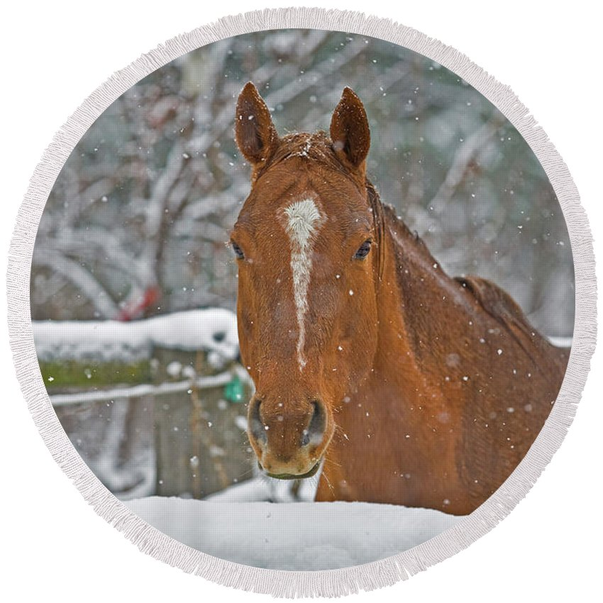 Horse Round Beach Towel featuring the photograph Horse And Snowflakes by Darrel Giesbrecht