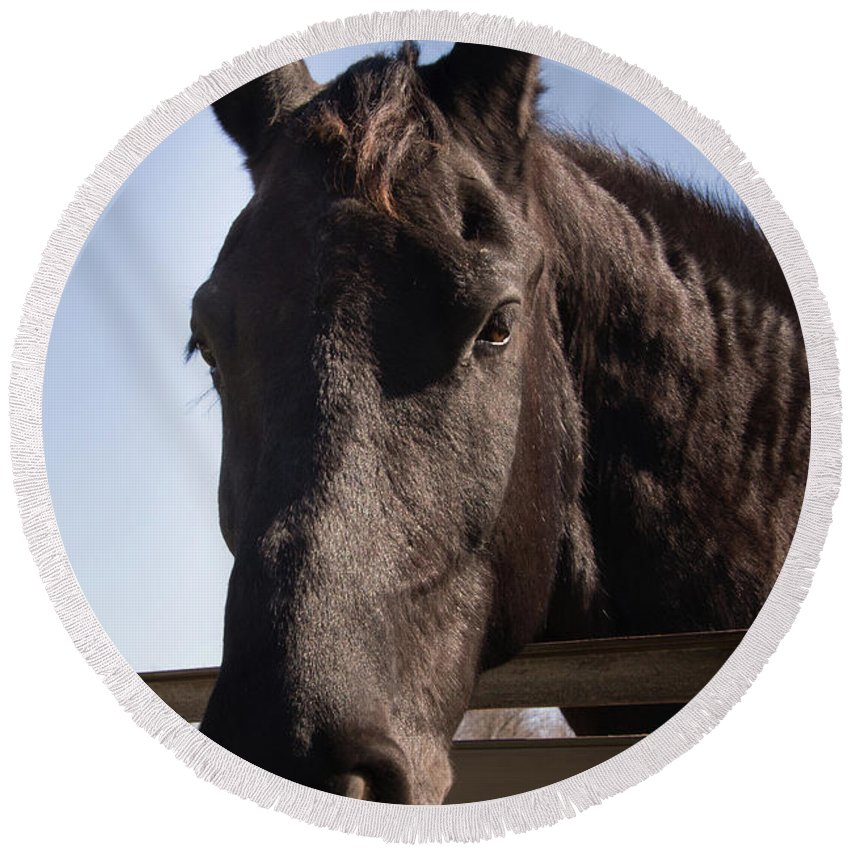 Horse Round Beach Towel featuring the photograph Horse By A Fence. by Diane Schuler