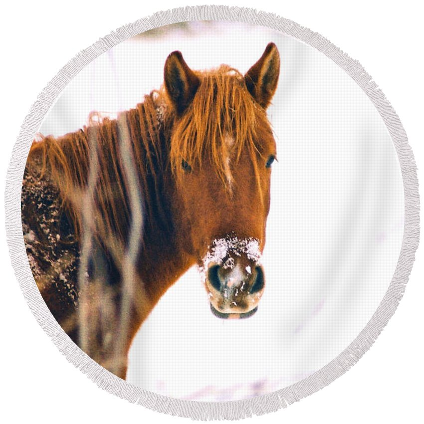 Horse Round Beach Towel featuring the photograph Horse In Winter by Steve Karol
