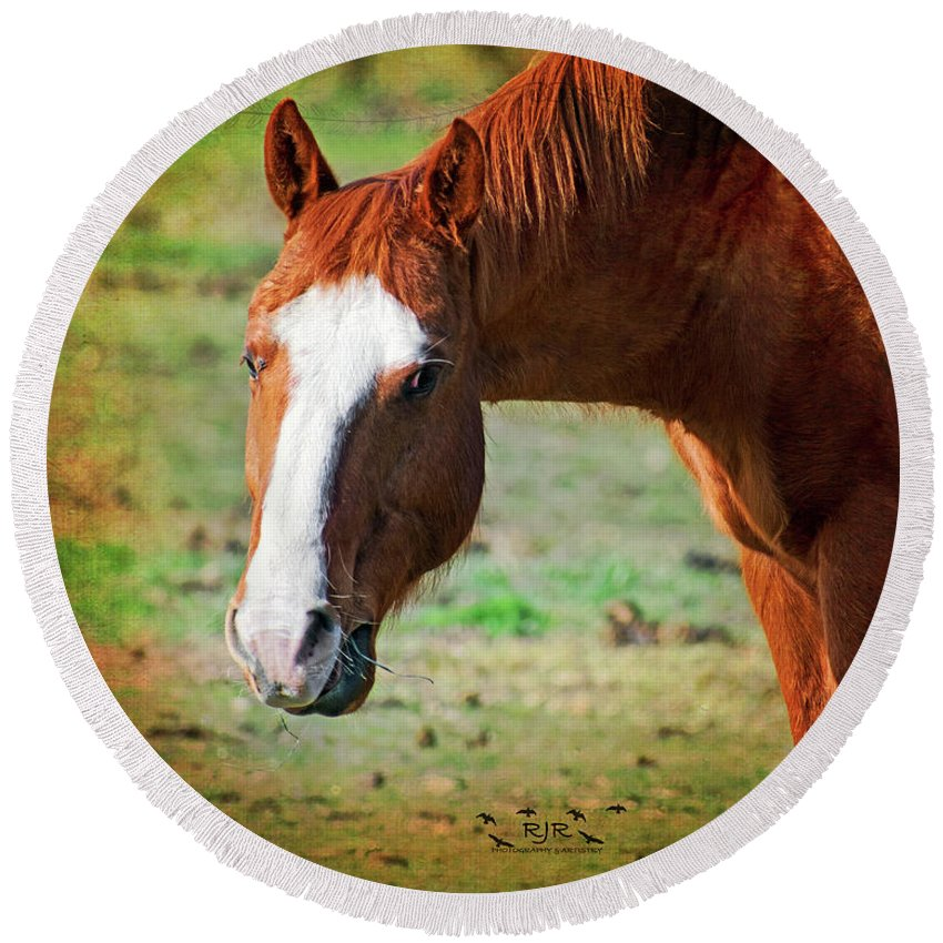 Horse Round Beach Towel featuring the photograph Horse Look by Rebecca Reyes