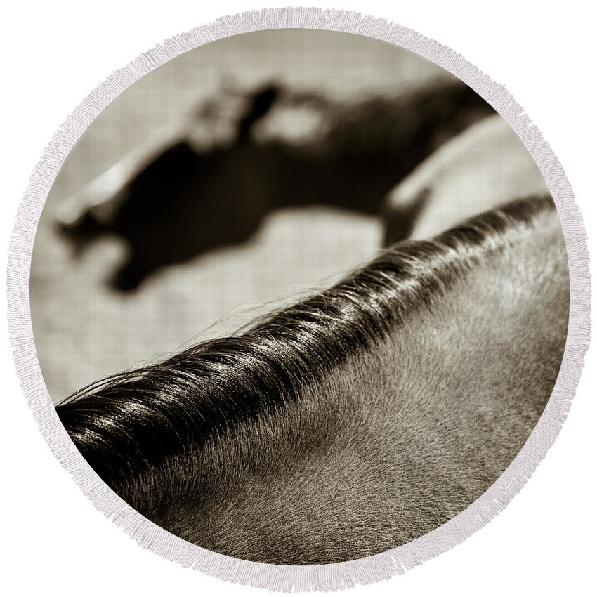Horses Round Beach Towel featuring the photograph Horse Play by Dave Bowman