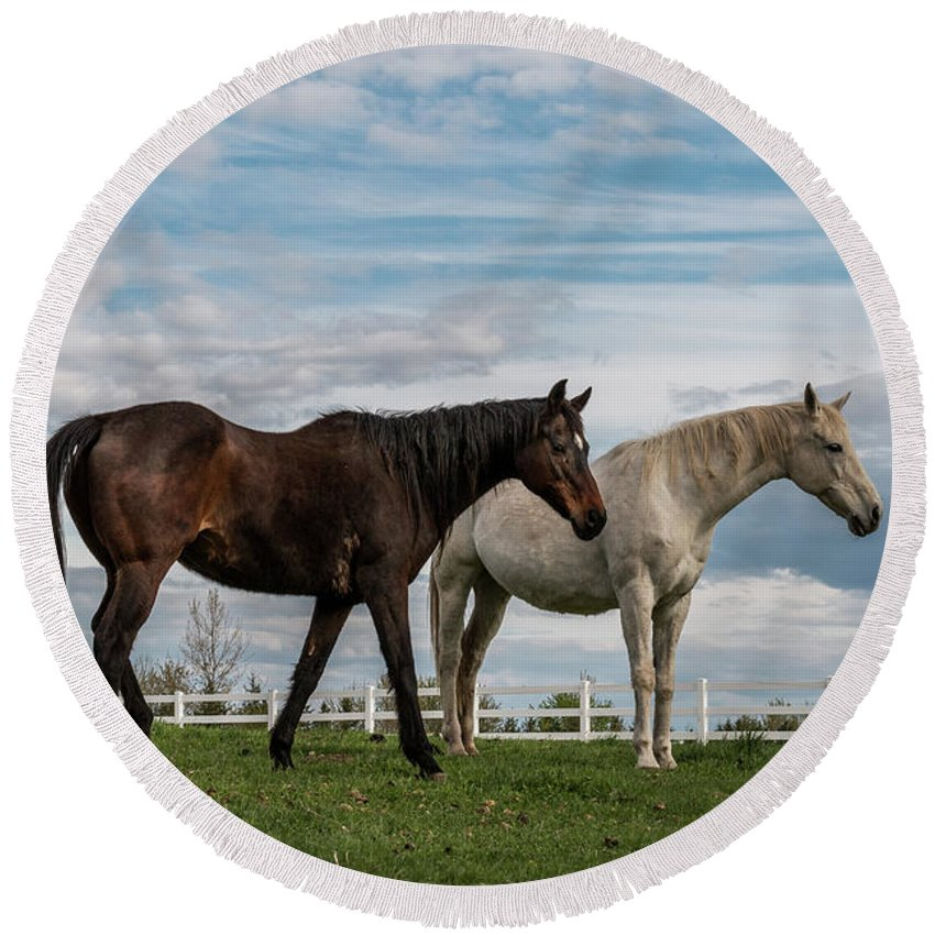 Horse Round Beach Towel featuring the photograph Horses #2 by Patti Deters