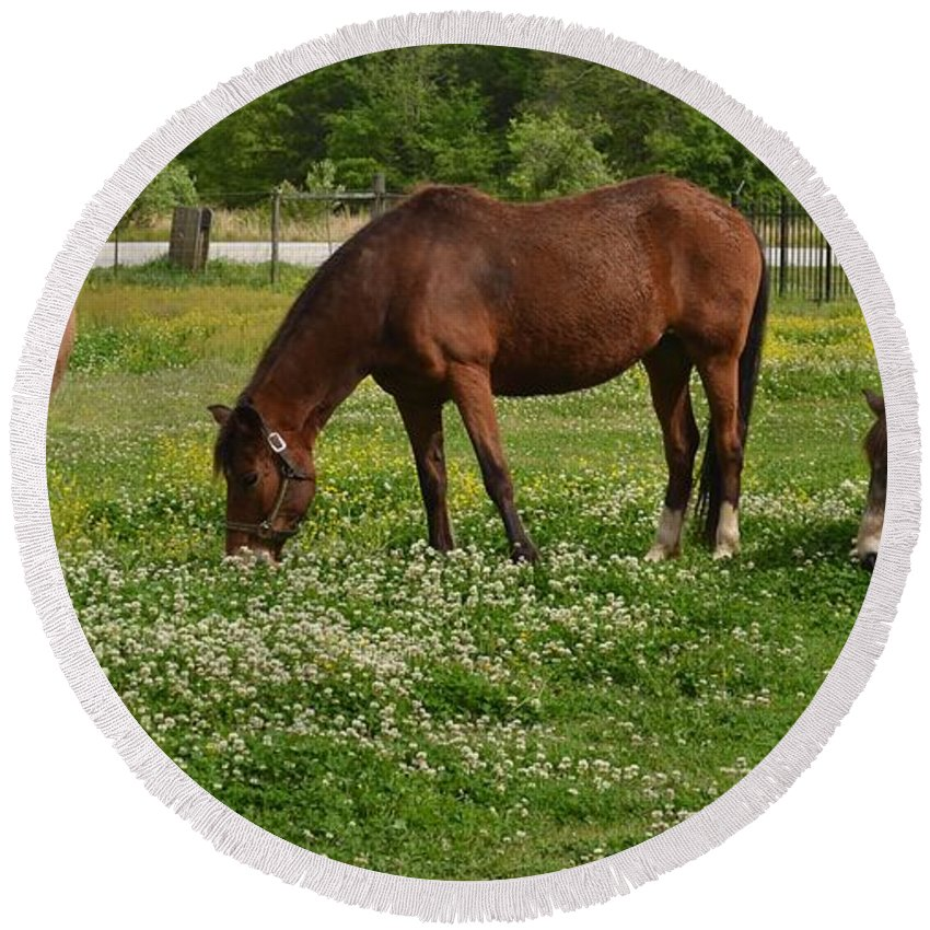 Horses Round Beach Towel featuring the photograph Horses In The Meadow 2 by Eileen Brymer