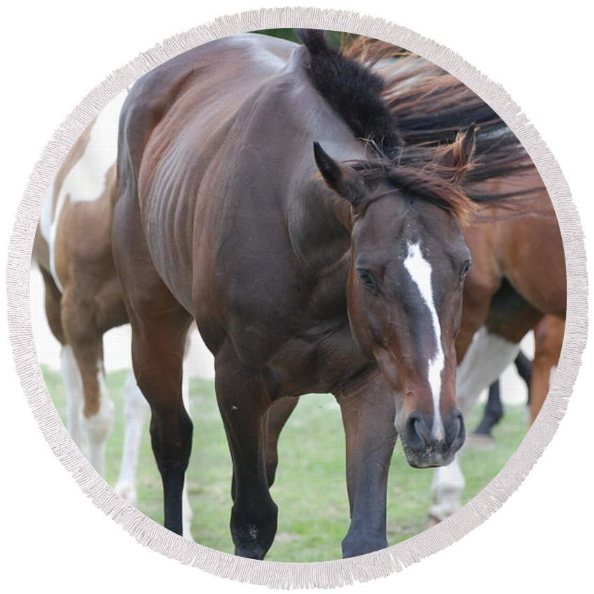 Horses Round Beach Towel featuring the photograph Horses by Rob Hans