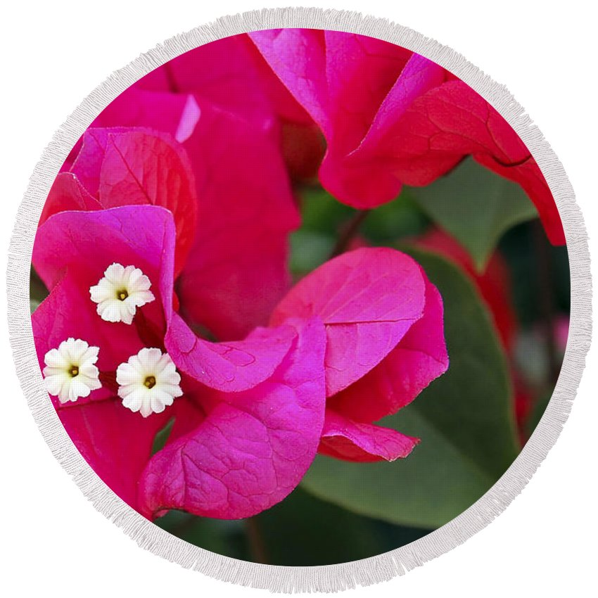 Flower Round Beach Towel featuring the photograph Hot Pink Bougainvillea by Teresa Zieba