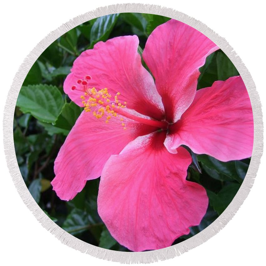 Pink Round Beach Towel featuring the photograph Hot Pink Hibiscus 1 by Mary Deal