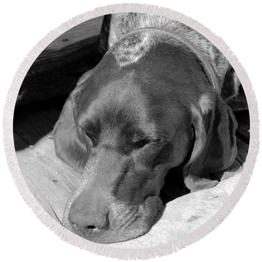 Dog Round Beach Towel featuring the photograph Hound Dog by David Lee Thompson