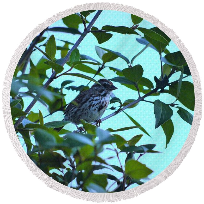 House Finch Round Beach Towel featuring the photograph House Finch by Sonali Gangane